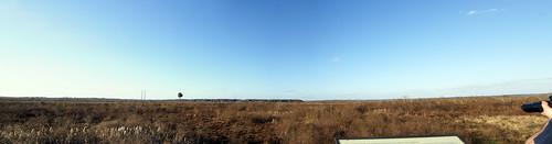 Paynes Prairie Panorama 1.
