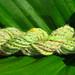 debi green fleck spun sample