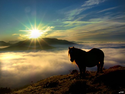 Pferd Kulisse