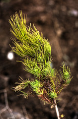 pendeli:  volunteer reforestation project (helen sotiriadis) Tags: mountain tree forest canon fire published dof bokeh athens depthoffield greece volunteer hdr reforestation photomatix penteli canonef100mmf28macrousm pendeli canoneos40d toomanytribbles