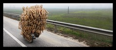 ON THE ROADS OF VIETNAM :o) (Sebastien LABAN) Tags: street vacation holiday color bike fog fun thailand lights weird funny box vietnam viet motor boxes phuket hanoi 2008 along halong nam buidling thailande pucket
