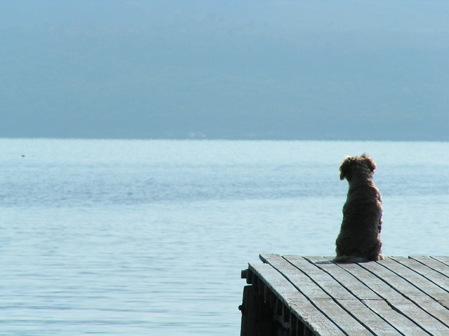 Dog looking out to sea, Greece