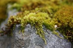 DV8_0675 (thunder_e_1) Tags: mossy narrows