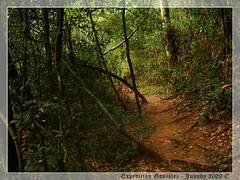Camino al Salto Guaran (Juandy Del Puerto) Tags: la minas natural salto paraguay rosada reserva buey campesino guaran quyquyh ybicu