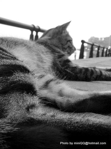 貓咪的角度-淡水河畔@2009春分