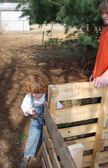 Getting ready to hammer away (Funky Mama Taney) Tags: hammer shannon pallet compostbin instructablescom dogproof