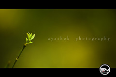 The Spring Song (ayashok photography) Tags: green home leaves for nikon floor bangalore minimalism tender natures 6th march23 nikonstunninggallery nikond40 ayashok spring09 nikor55200mm manivannansbday agnaevents