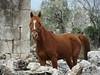 kaukanaya s 27-03-2009 12-22-43