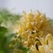 0903 bouquets #4