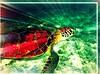 Nowhere to go - edit (joehall45) Tags: ocean sea vacation holiday nature beautiful beauty mexico turtle wildlife homeless apocalypse frame april jpg reef seaturtle 2009 sandbox picnik starburst nosha yuccatan april2009 apocalypsefirday