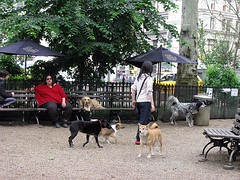 dogs mingle in a NYC park (by: Natalie Maynor, creative commons license)