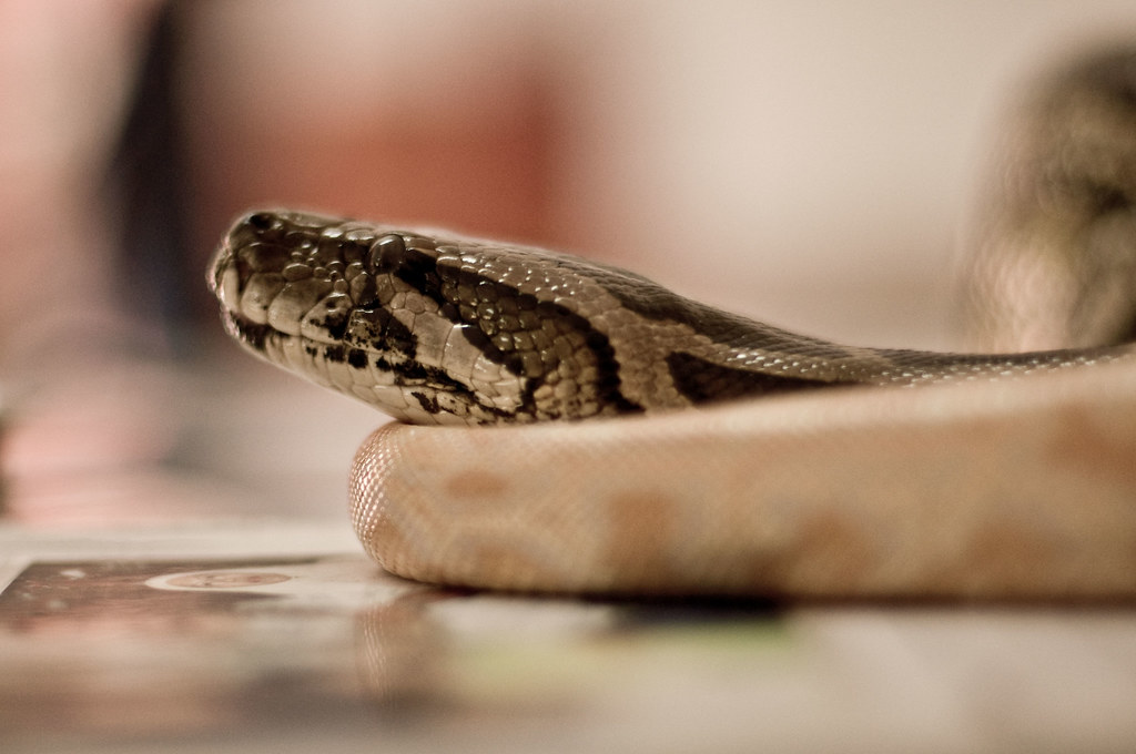 where is my snake/ snow white?