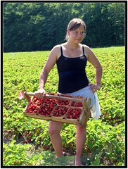 Leora picking Michigan strawberries by Blondieyooper