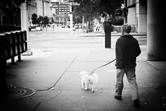 Man Walking Poodle