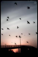 starts of a dream (1 of 1) ( Fahad almnay3 \\\\) Tags: beauty birds sunrise fly creative dream imagination starts fahad fantacy   almunaya