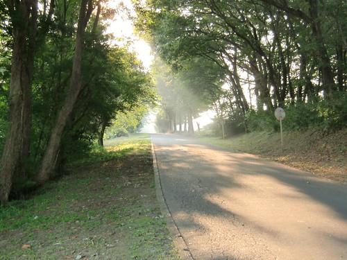 My promenade 8