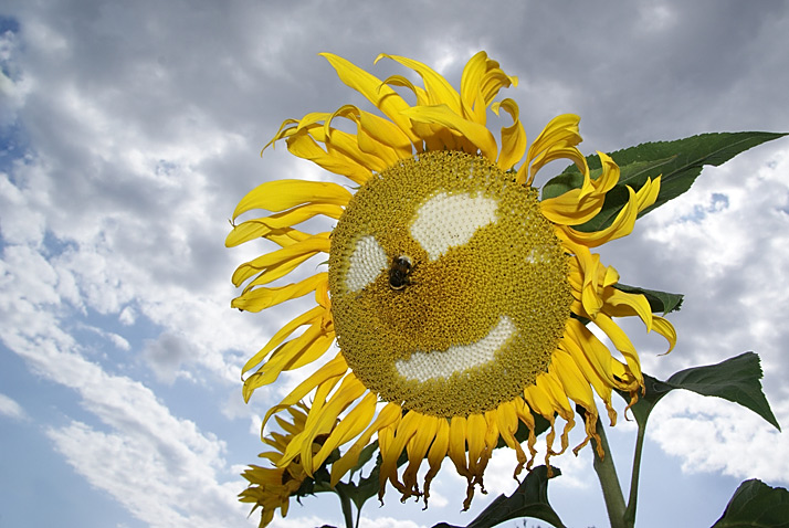 [img: sunflowers from alien seeds]