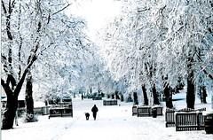 snow garden's