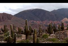 Cardn (Charliemoon_ar) Tags: cactus argentina landscape desert paisaje paisagem desierto noa jujuy deserto cardon tilcara argentino cardones noroeste charliemoon miargentina