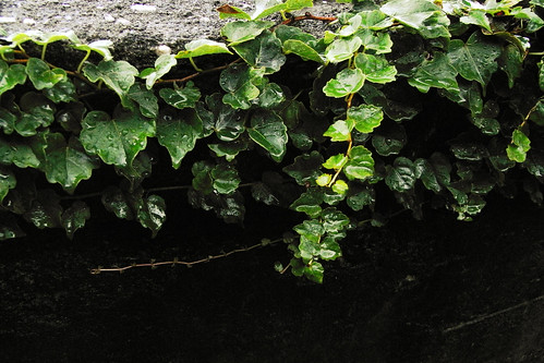 plants-028