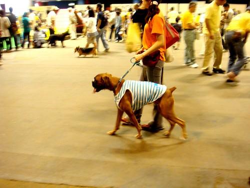 動物愛護ふれあいフェスティバル