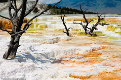 Terraces At Mammoth Hot Springs (Marc Shandro) Tags: nature location difference northamerica change yellowstone wyoming geology volcanic mammothhotsprings thermalwaters specnature