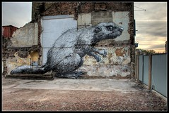 Roa - Massive Beaver! (Romany WG) Tags: street urban london art animals graffiti rat outsider contemporary like beaver east massive hoxton end though roa