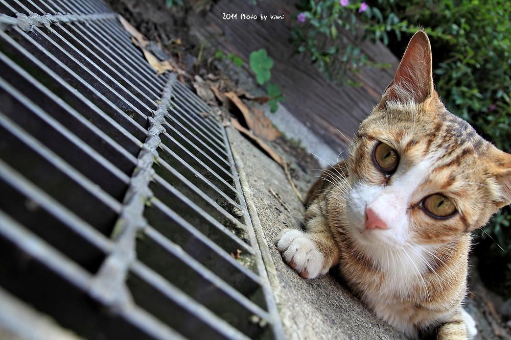 漫步侯硐-貓咪篇
