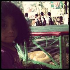 Sanca @ mini zoo