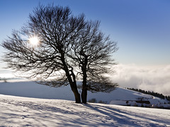 Warming the Cold (andywon) Tags: blue sky sun mist cold tree nature fog germany landscape deutschland warm valley rays beech buche schauinsland badenwrttemberg explored gieshbel stohren gettyimagesgermanyq1