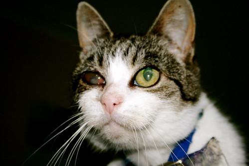 Manson Cat