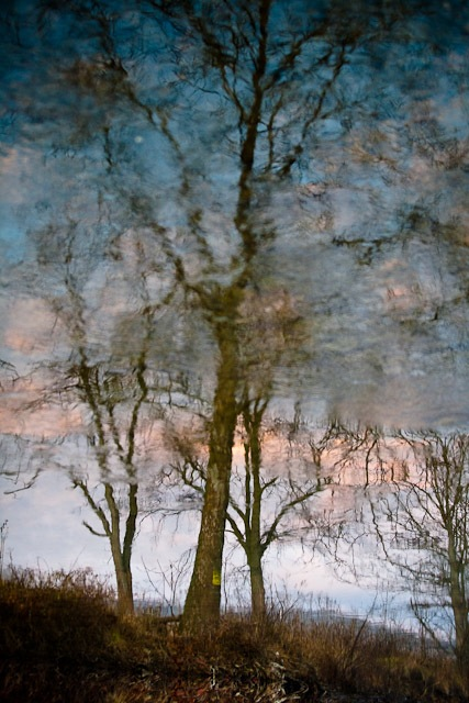 Tree reflected in Shenandoah River