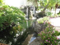 IMG_2885 (IanLudwig) Tags: old canon hawaii with taken powershot kauai hawaiian hawaiikai bigislandhawaii hawii hawaiibeach a620 hawaiicondo hawaiis kauaihawaii hawaiivolcano hawaiipictures konahawaii hawaiiisland travelhawaii kauaibeach alohahawaii my kauaiisland hawaiitour hawaiibeaches kauaivacation hawaiiactivities kauaitravel weddinghawaii hawaiiislands hawaiisurf hawaiihilo hawaiihotel kauaivacationrental vacationhawaii hawaiihotels northshorehawaii hawaiimap hawaiiluau kauaicondo hawaiiweather hawaiiweddings hawaiifishing hawaiiattractions hawaiivacationpackages hihawaii hawaiivacationrentals hawaiirentals kauairentals resorthawaii hawaiicondos kauaitours hikauai resortshawaii kauaihotel hawaiitours kauairental hawaiirental vacationshawaii traveltohawaii kauaihotels kauairesort vacationrentalskauai hawaiiinformation kauaiweather