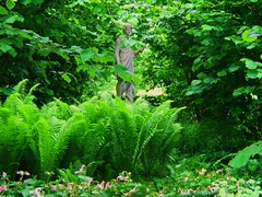 Peeking Through the Green at Sissinghurst (UGArdener) Tags: england english trillium sissinghurst kent spring flora unitedkingdom britain may hazel ferns statuary nationaltrust springtime englishgardens gardenstatuary englishtravel