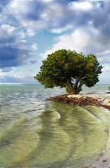 Annes Beach,Islamorada FL (dbullens) Tags: travel tree beach google florida blink islamorada soe floridakeys bigmomma supershot bej abigfave annesbeach platinumphoto aplusphoto diamondclassphotographer theunforgettablepictures goldstaraward thechallengefactory ubej