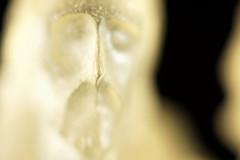 Cristo em 2.8 (joao barroca) Tags: macro mark iii cristo 1ds mpe65 clubefotorio markiii1ds macrophotographymacrofotografia cristoinmacro