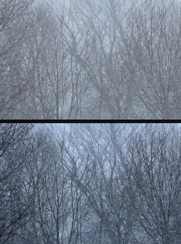 snow tree diptych