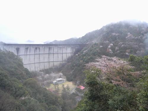 09-03-22【桜】@奈良県下北山村-01