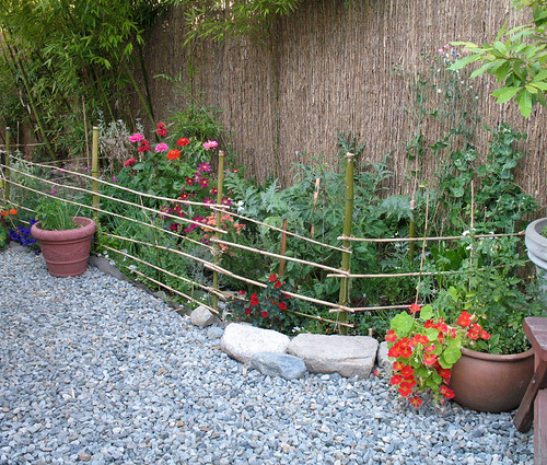 First vegetable garden, 2008