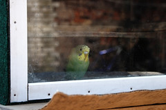 under_arrest (vtornick) Tags: street green yellow sadness parrot ukraine sight krivoyrog  kryviyrih
