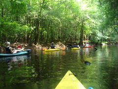 CHOA kayak eco Tour Congaree Swamp National Park