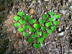 Heart and hearts (Lucie Veilleux jewelry) Tags: green love nature leaves hearts 3dots