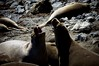 (manfrotto tripods) Tags: california nature animals tripod workshop sealions tripods manfrotto dongale corradogiulietti