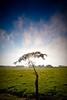 Lone Tree (Dan Ballard Photography) Tags: tree sunrise la junta souttheastcolorado