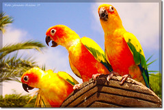 Birds (_Hadock_) Tags: show windows wallpaper bird colors birds animal yellow port de macintosh three photo mac colours foto shot screensaver background sony osx creative 7 parrot commons awsome amarillo leopard pajaros pico xp linux vista tres animales pajaro incredible unix palmera fondo dsc escritorio cyber loro protector pantalla salou siete aventura pantallas salva garras plumas increibles amarillas espectculo walpaper lorito salvapantallas w120 comons ltytr1 colroes llelow