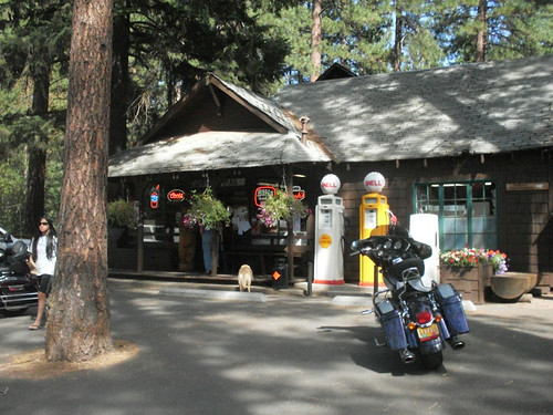 cute store in the trees