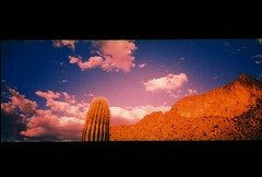 Picacho Saguaro in Titanium XPRO (kevin dooley) Tags: park lighting arizona cactus panorama cloud mountain southwest film broken nature 35mm lomo xpro lomography fuji cross desert state slide az already wrong company pomo saguaro process titanium sonoran fujichrome cheap e6 picachopeak panaroma chemical picacho panarama sagaro trashcam c41 t64 cloudshot naturecompany ponaroma ponaromo