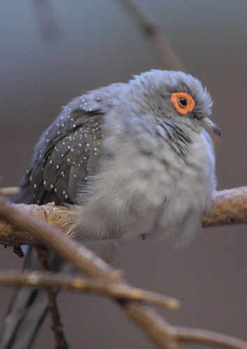 Orange-Eyed Bird
