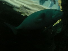 Dudong (stonethecrow) Tags: australia seacreatures sydneyaquarium