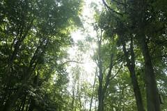 _MG_6313.JPG (zimbablade) Tags: trees sleepyhollow dougmiller videopoem